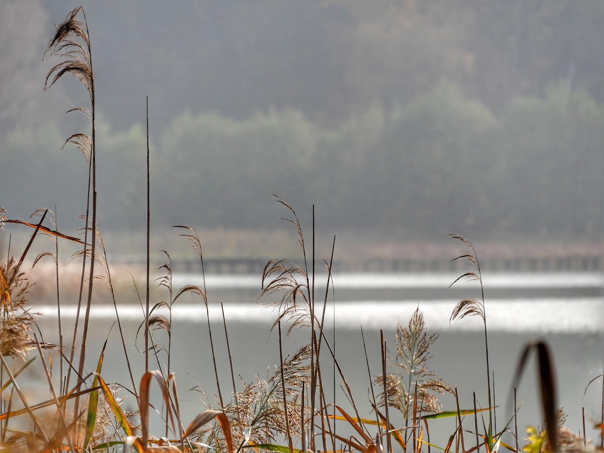 Umgebung: Petersdorfer See